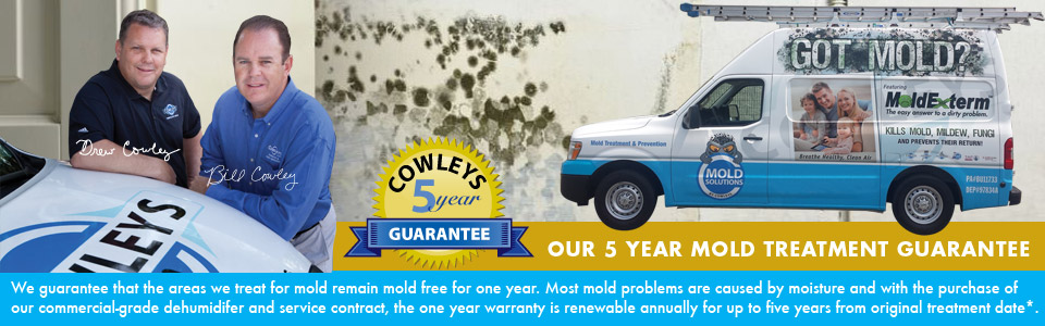 Mold Solutions by Cowleys